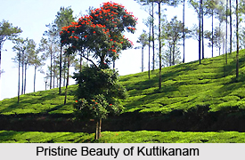 Peerumedu , Hill station in Kerala
