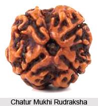 Chatur Mukhi Rudraksha