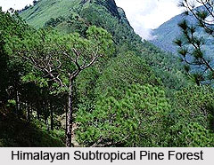 Himalayan subtropical pine forests