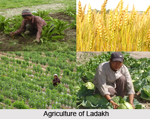Agriculture of  Ladakh, Jammu and Kashmir