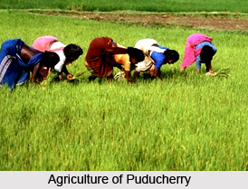 Puducherry, Indian State