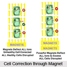 Effect of Magnets on Body Systems