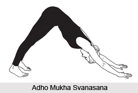 Image result for Adho Mukha Svanasana,