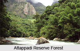 Attappadi Reserve Forest, Palakkad District, Kerala
