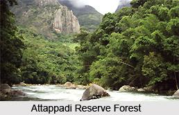 Attappadi Reserve Forest, Palakkad District, Kerala