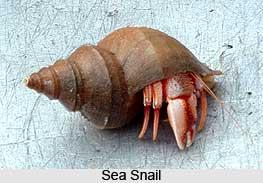 Snails, Molluscs