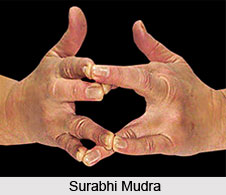 Surabhi Mudra, Types of Mudras