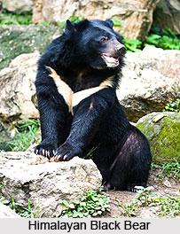 Dachigam Wildlife Sanctuary Jammu And Kashmir
