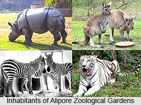 Alipore Zoological Gardens, Kolkata
