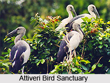 Attiveri Bird Sanctuary, Karnataka