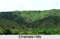 Erramala Hills, Kurnool, Andhra Pradesh