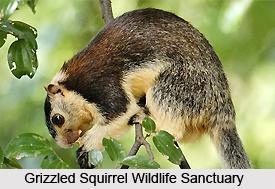 Grizzled Squirrel Wildlife Sanctuary, Chennai