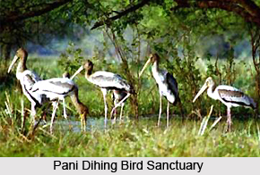 Pani Dihing Bird Sanctuary, Assam