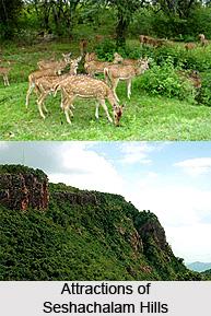 Seshachalam Hills, Andhra Pradesh