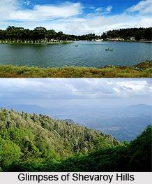 Shevaroy Hills, Salem, Tamil Nadu