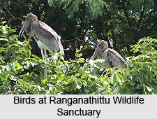Wildlife Sanctuaries of South India