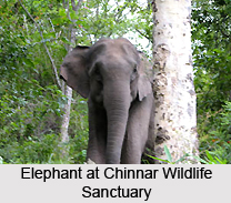 Wildlife Sanctuaries of Kerala