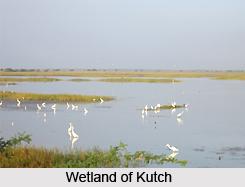 Indian Wetland