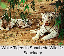 Wildlife Sanctuaries Of Orissa