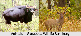Sunabeda Wildlife Sanctuary, Orissa
