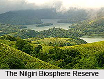 Nilgiri Biosphere Reserve, South India