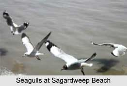 Sagardweep Beach, West Bengal