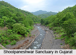 Forests and sanctuaries along Narmada, Indian River