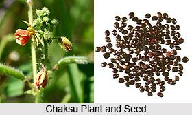 Chaksu, Indian Medicinal Plant