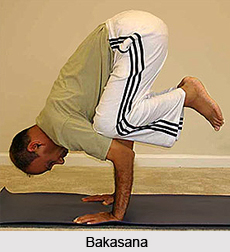 Concepts in Hatha Yoga