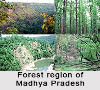 Forest Vegetation in Central and North India