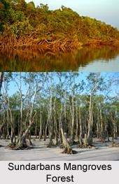 Sundarbans Mangrove Forest in India