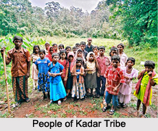 Kadar Tribe, Kerala