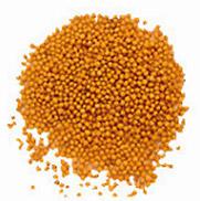 Yellow Mustard