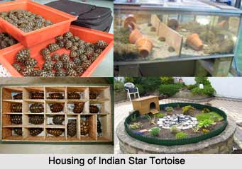 Indian Star Tortoise, Indian Reptile