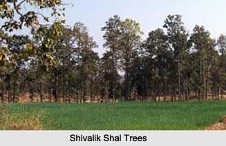 Shivalik Hills, Himalayan Mountain Range