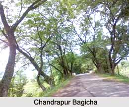Chandrapur Bagicha, Kamrup District, Assam