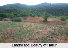 Harur, Dharmapuri, Tamil Nadu