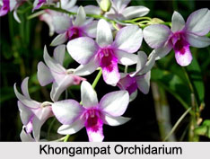 Central Khongampat Orchidarium, Imphal, Manipur