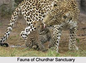 Churdhar Sanctuary, Himachal Pradesh