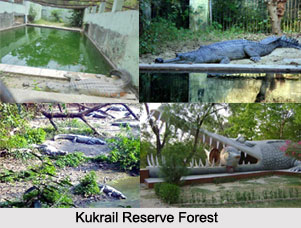 Kukrail Reserve Forest, Lucknow