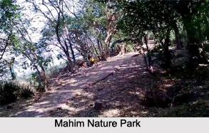 Mahim Nature Park Information In Marathi
