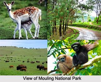 Mouling National Park, Arunachal Pradesh