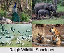 Rajgir Wildlife Sanctuary, Nalanda District, Bihar