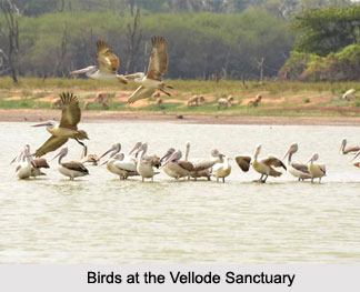 Vellode Bird Sanctuary