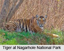 Nagarhole National Park, Karnataka