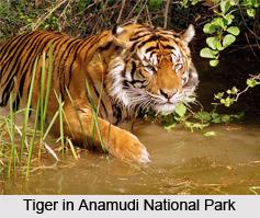 Anamudi National Park, Kerala