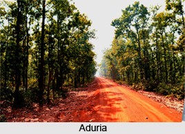 Nature Tourism in West Bengal