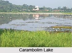 Carambolim Lake, Goa