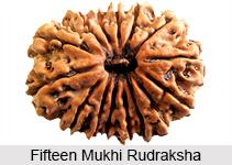 Fifteen Mukhi Rudraksha, Astrology
