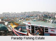 Kujang, Paradip, Odisha